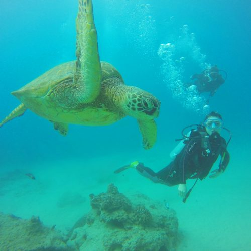 <center>ハワイ(オアフ) – 半日ダイビングツアー!エリックと行くオアフダイビング <br><small>HAWAII – Oahu Diving</small></center>